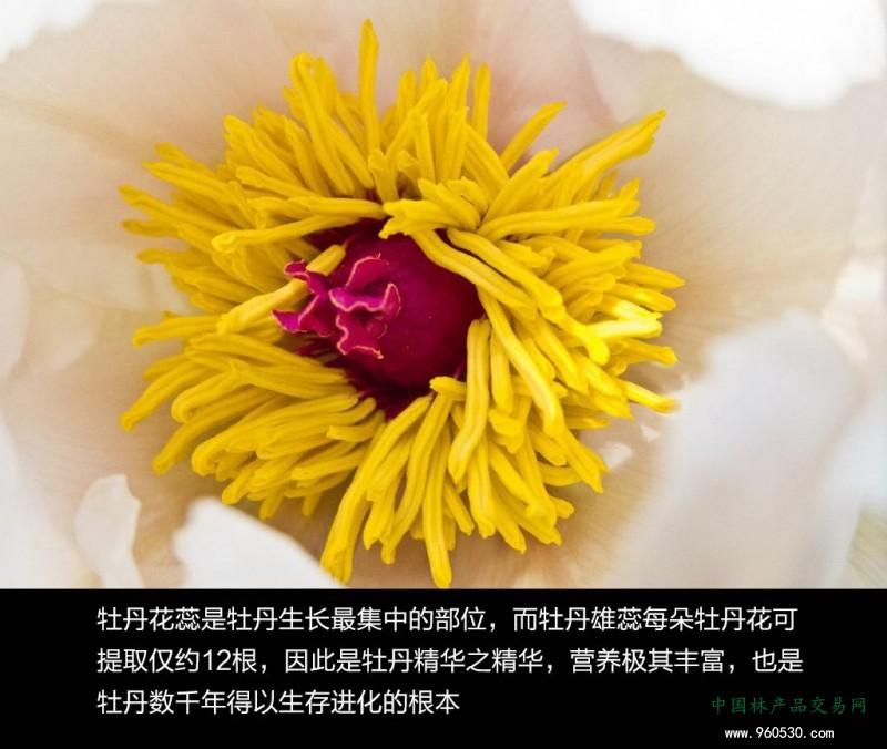 微信图片_20200515100137